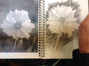 She started with a grid, but drew the flower free-hand.
